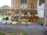 Fall at the farm market