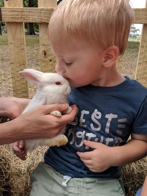 bunny kisses