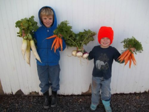 The boys with some winter veggies