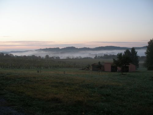 Early Autum Morning in the Vineyard