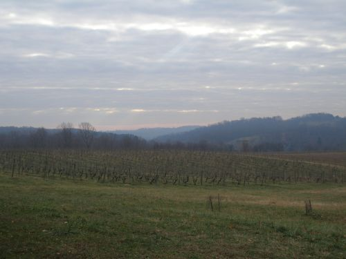 Old Vineyard