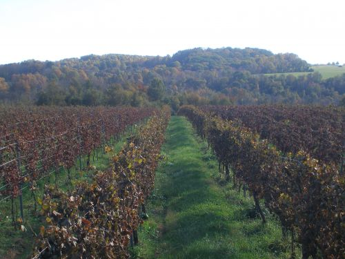 October in the Vineyard