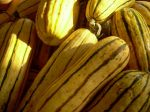 Delicata Squash - photo credit, Russ Eck