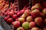 Honeycrisp Apples on display at Headhouse, Sept. 09 - photo by Jenn, Straight from the farm blog