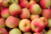 Gala Apples (1/2 bu crate)
