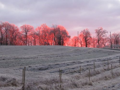 Sunrise Over Our Frosty Veggie/Berry patch - taken from my father's Facebook page!