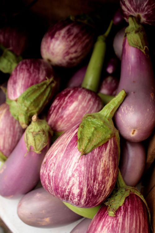 heirloom eggplant - http://straightfromthefarm.net/