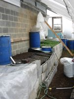 Compost Bunkers in Greenhouse produce heat in winter for starting seeds
