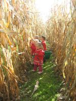 picking corn and dried beans