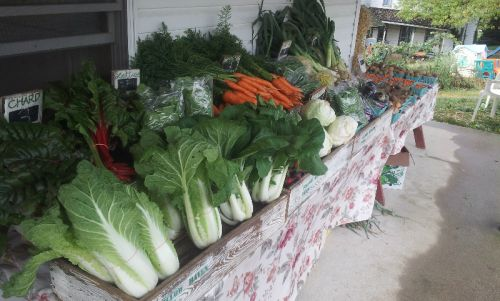 Veggies on display at the farm