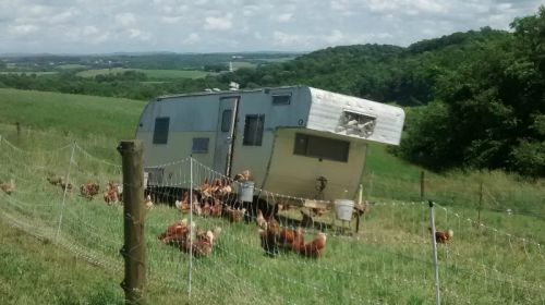pastured chickens & chicken camper