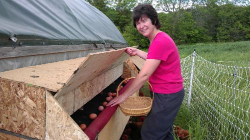 Roll out nest boxes to keep eggs clean