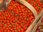 Matt's Wild Cherry Tomatoes