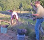 Bill & Martha Harvesting