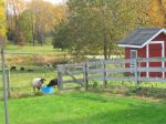 Late October Farm Scene