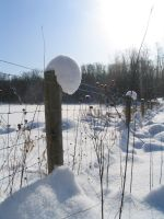 fenceposts with snow