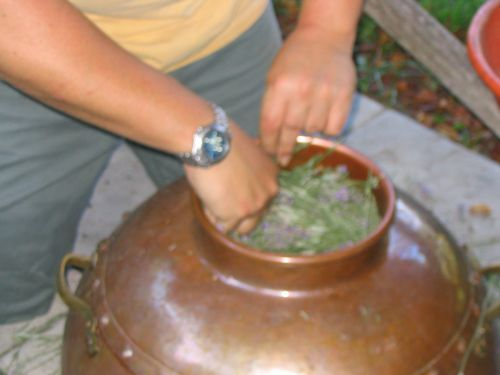 Loading the Still with Lavender-1