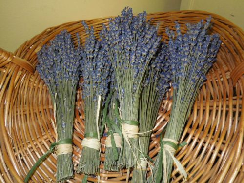English Lavender bunches