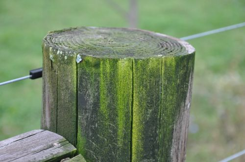 even the fence posts have charm