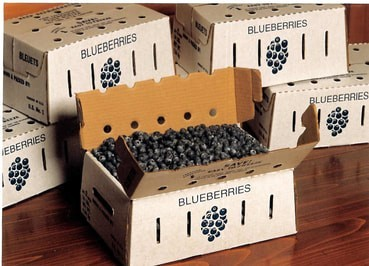 10# Fresh Blueberries