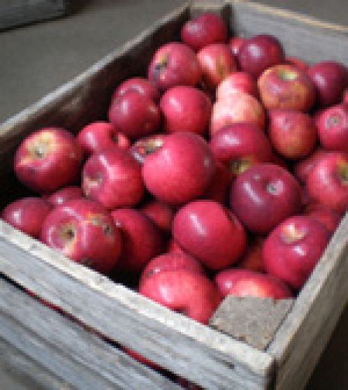 Bayfield Apple Co