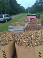 some of the potatoes