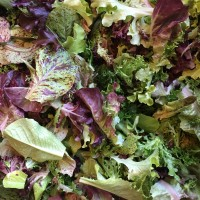Salad, Lettuce Mix