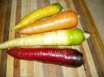 Rainbow of carrots