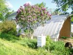 chickens house, lilac and bees