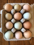 Our beautiful eggs in carton