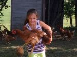 Too many chickens!