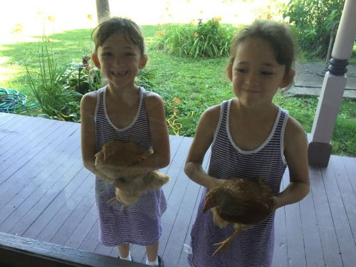 Twins and chickens