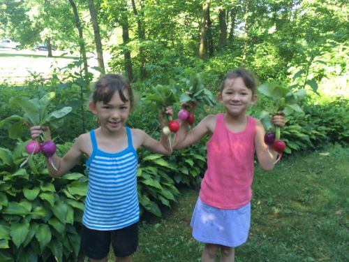 Twins and radishes