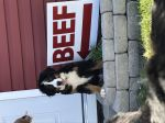 CoPilot wants you to visit us on the farm to purchase your beef!