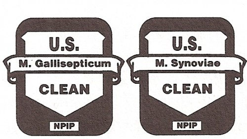 NPIP M. Gollisepticum and M. Synoviae Clean logos
