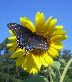 we value beneficial insects