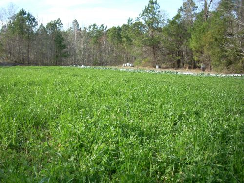 cover crops in organic field