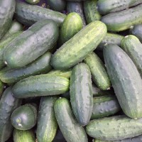pickling cukes, 10 lbs or more