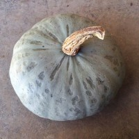 Winter Sweet winter squash, 10 lb