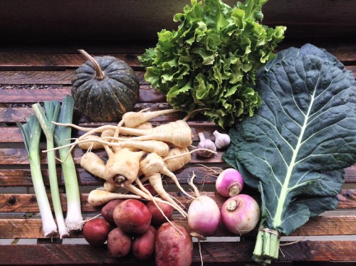 Winter CSA Share - ON-FARM PICKUP ONLY