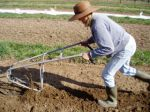 Creating furrows for spring carrots