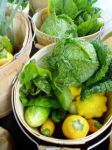 Savoy Cabbage and Summer Squash