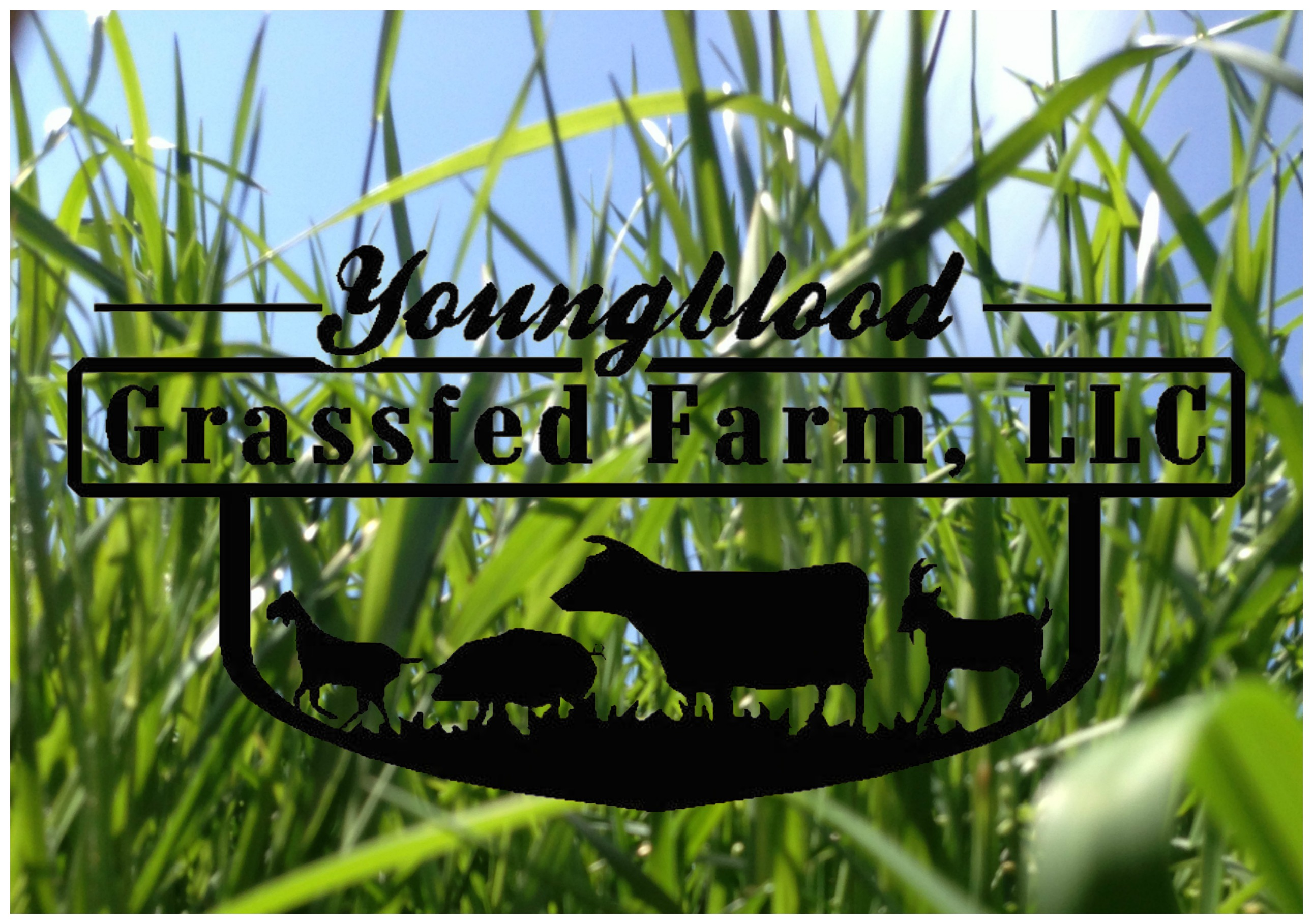 Youngblood GrassFed Farm, L.L.C. Logo