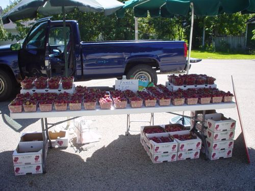 Selling Yummy Strawberries