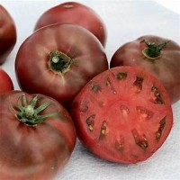 Tomato Plants- Black Krim