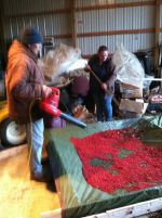 Rod and Carol cleaning the harvest
