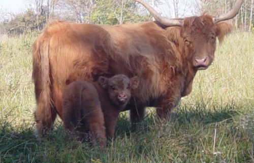 Nothing quite as thrilling as calving season.  Two new additions to our herd.  More on the way.