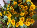Sunbright sunflowers