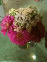 pink zinnia and yarrow