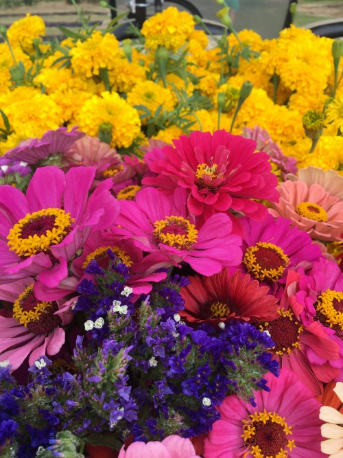 MARIGOLDS AND ZINNIAS